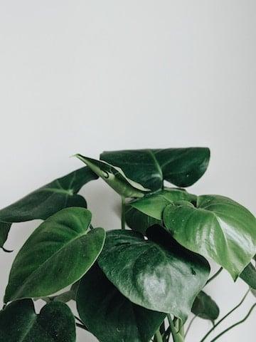 anti radiation plant